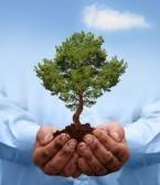 hand&tree