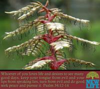 psalm-34-12-14