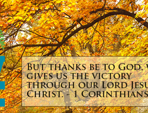 Giving Thanks – Day 19