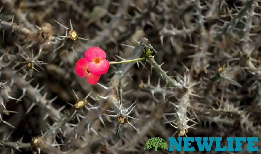 Redeeming the Thorns